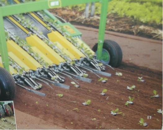 Garlic Planting Machine